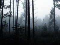 Thumb-Dark_Forest_2