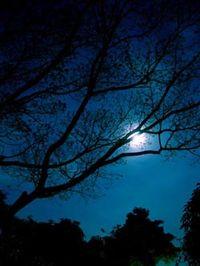 Semota_My_winter_night