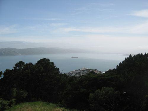 Wellington 002