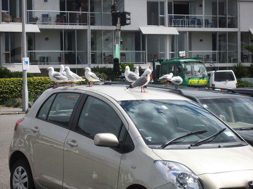 Christchurch 041