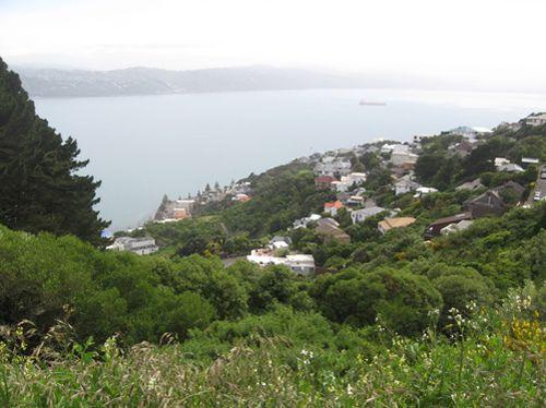 Wellington 008