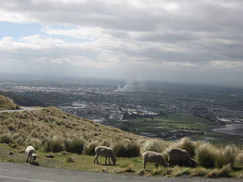Christchurch 051