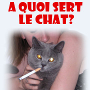 A quoi sert le chat ?